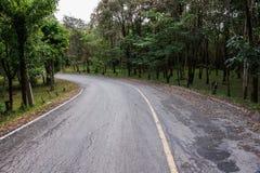由国家森林决定的路 库存照片