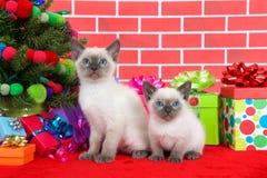 由圣诞树的两只暹罗小猫 图库摄影