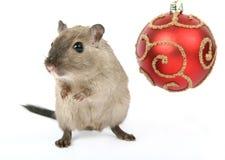 由圣诞节装饰的逗人喜爱的啮齿目动物在雪白背景 免版税库存照片