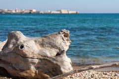 由大海的漂流木头 库存图片