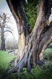 由小河的冬天树 免版税库存照片