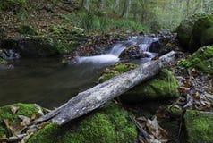 由小河的木头,克罗地亚 免版税库存图片
