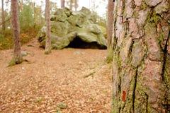由岩石关闭视图的树 免版税库存图片