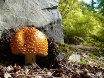 由岩石的蘑菇 免版税图库摄影