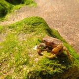 由岸的螃蟹 库存图片