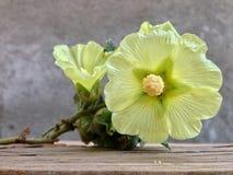 由庭院,我美丽的庭院的一个房子有美丽的野花的,酿造芬芳mdicin茶,健康和strog心脏的 免版税库存照片