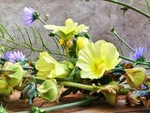 由庭院,我美丽的庭院的一个房子有美丽的野花的,酿造芬芳mdicin茶,健康和strog心脏的 库存图片