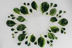 由新鲜的绿色菠菜做的圆的框架顶视图离开 库存图片