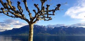 由日内瓦湖的赤裸树在沃韦,瑞士 库存照片