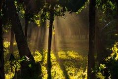 由日出的Palmtree森林 免版税库存图片