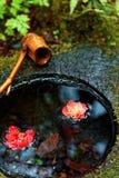 由日本茶屋子的一石水盆chozubachi,有在c &美丽的山茶花花的一个竹瓢的下落的水水池 免版税库存图片