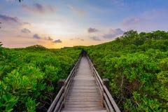由日落的美洲红树森林 库存图片