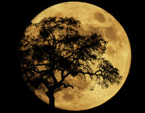 由月光 图库摄影