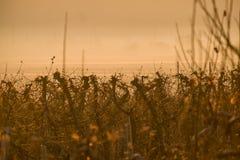 由有雾的湖的葡萄园 免版税库存照片