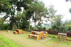 由木做的空的餐桌位于庭院有很多绿草和杉树 库存照片