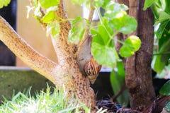 由树决定的一次蜗牛攀登在庭院 免版税库存照片
