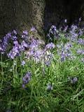 由树的会开蓝色钟形花的草 库存图片