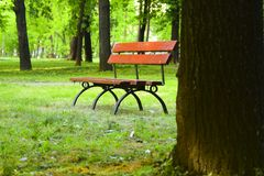 由树的长凳 库存图片