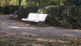 由树篱的白色长凳在公园 股票视频
