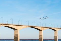 由桥梁的飞行天鹅 免版税图库摄影