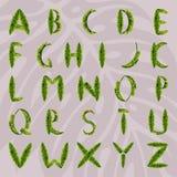 由棕榈叶做的英语字母表 库存图片