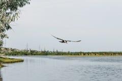 由水的一次小的鸟飞行 免版税库存图片