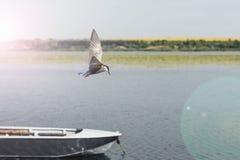 由水的一次小的鸟飞行 免版税库存照片