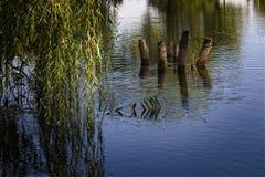 由池塘的夏天晚上 免版税库存照片