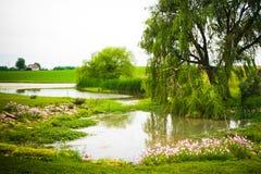 由池塘的杨柳 免版税库存图片
