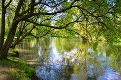 由池塘的树 库存图片