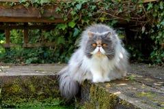 由池塘的波斯猫 免版税库存图片