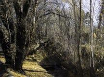 由河床的下落的Leavves 库存照片