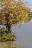 由河沿的柳树 免版税库存图片