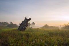由河的一个有薄雾的早晨 库存图片