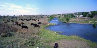 由河的全景牧场地 图库摄影