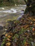 由河的叶子 库存照片