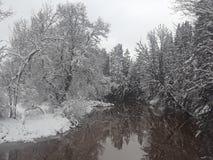 由河的斯诺伊树 库存图片