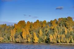 由河的森林在秋天 图库摄影
