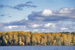 由河的森林在秋天 库存照片