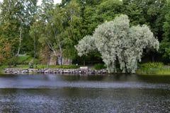 由河的白色树 库存照片