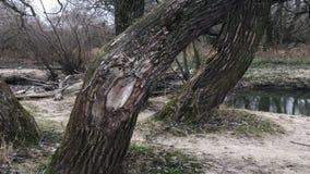 由河的秋天树 秋天霜 阴沉的冷天 影视素材