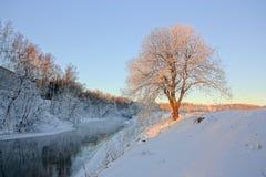 由河的被日光照射了树在冬天 免版税库存照片