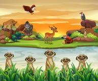 由河的野生动物 库存例证
