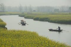 由河的黄色花在春天 免版税图库摄影