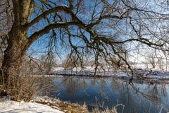 由河的结构树 库存照片