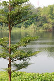 由河的结构树 免版税库存图片