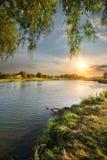 由河的紫皮柳树 库存照片