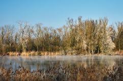 由河的结霜的树 图库摄影