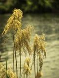 由河边的植物 库存照片