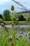 由河Mosselle的新鲜的植物在春天 免版税图库摄影